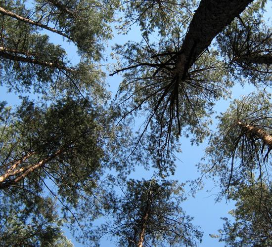 summer 2015, летний лес