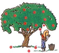 kisah pohon apel