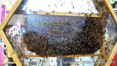 bees at Noel Discovery Bazaar 2011