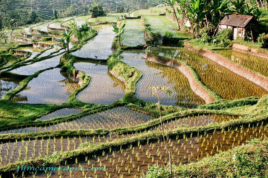 Sidemen Rice Fields