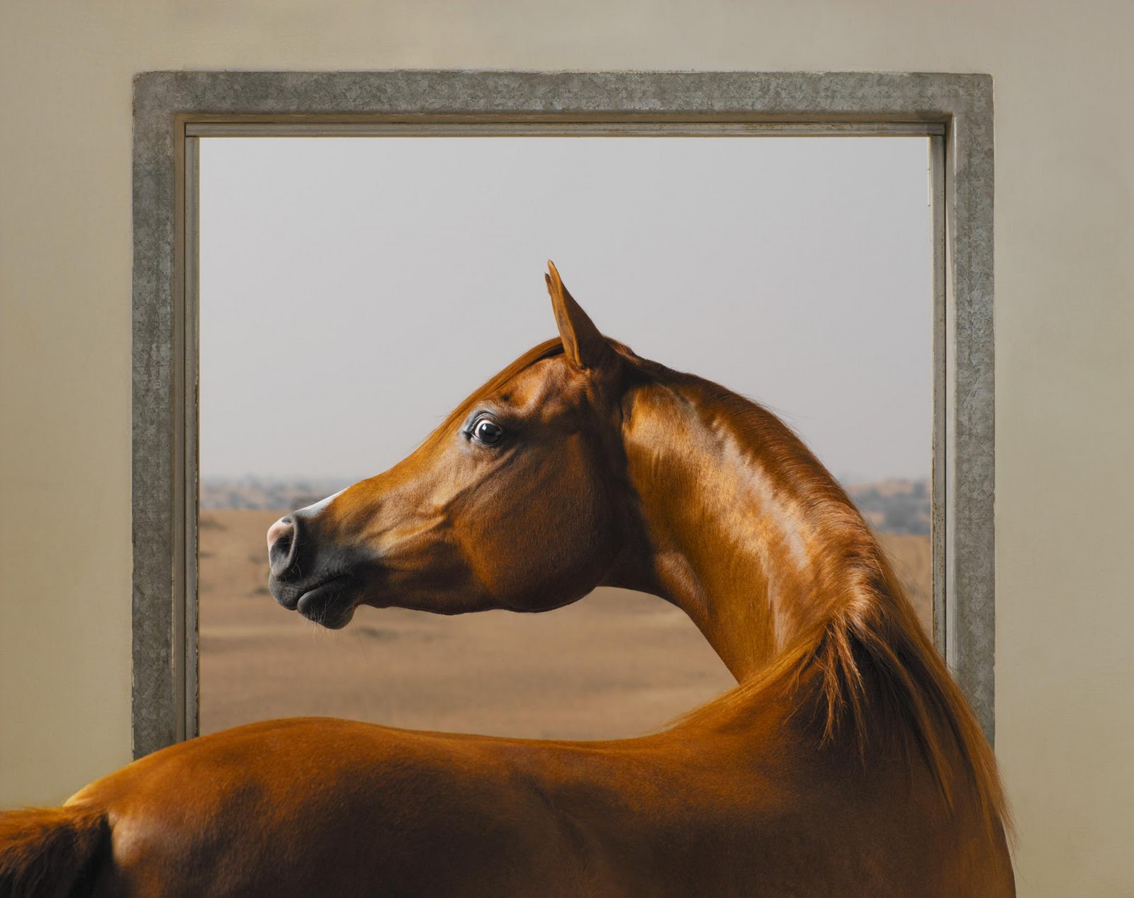 The reel foto tim flach equus or the beauty of the horse for Window horses