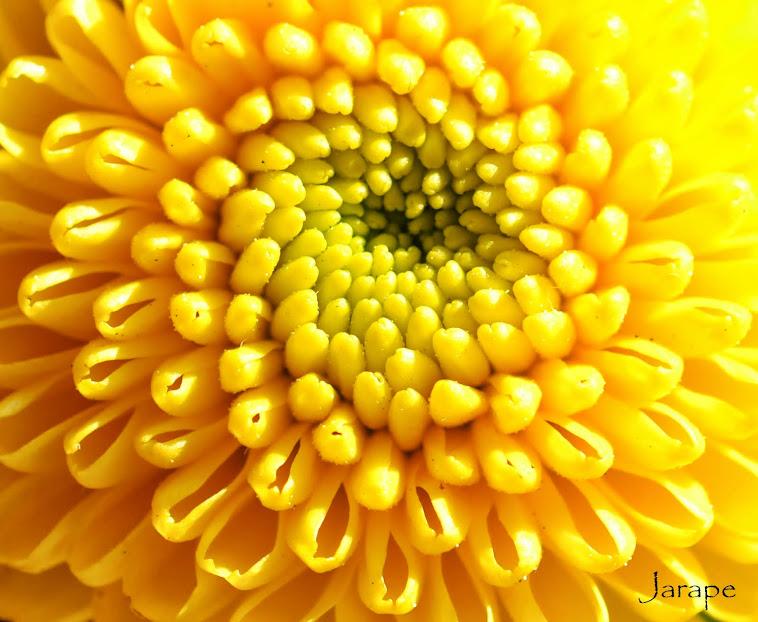 Ola en amarillo