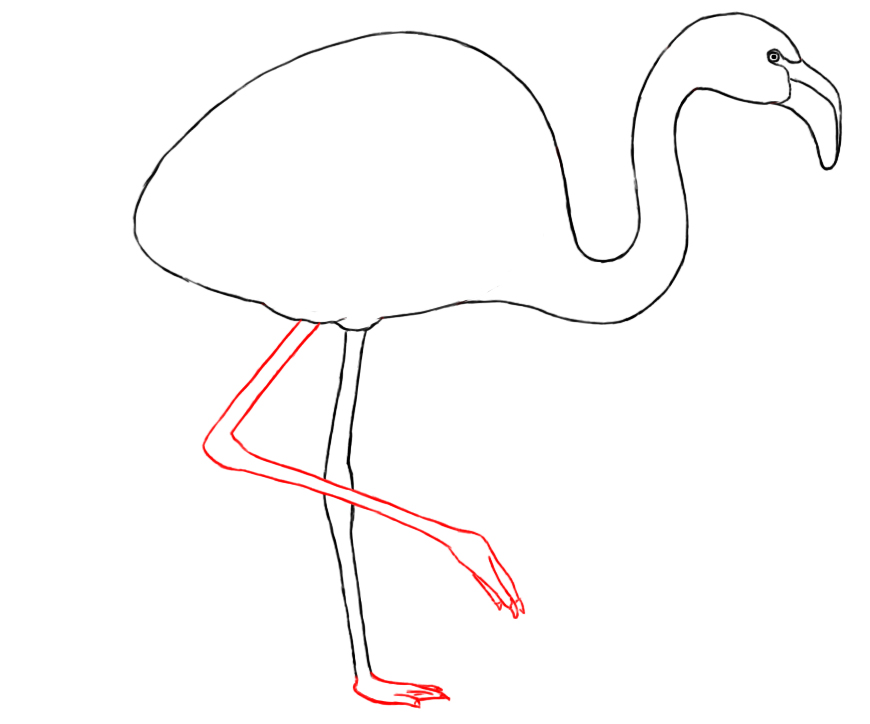 How To Draw A Flamingo Draw Central