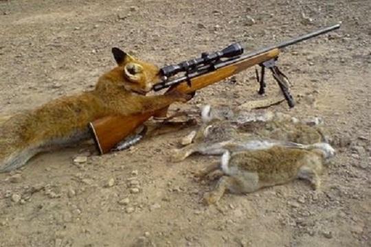 funny sniper photo
