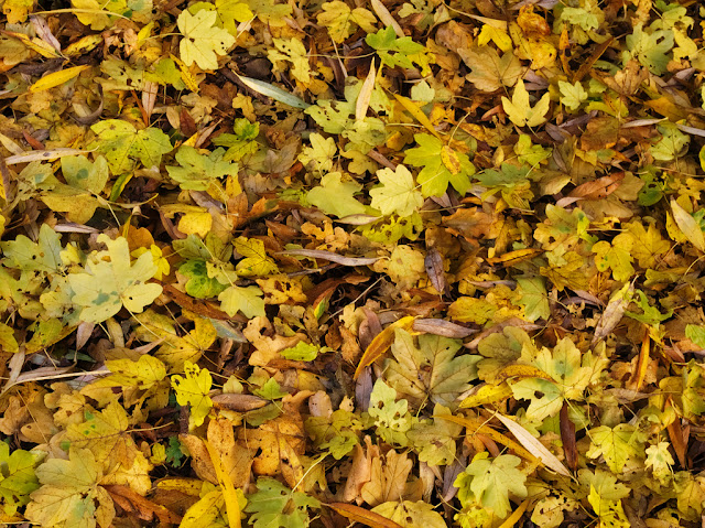 Close up of carpet of fallen leaves