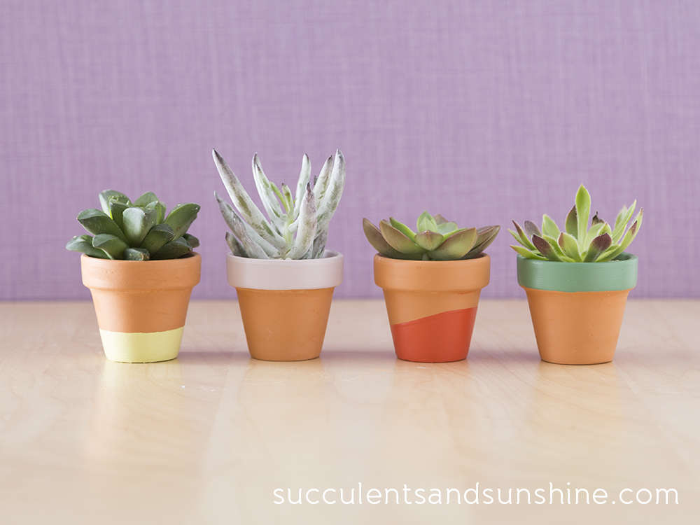 Succulent Project Round Up Confessions Of A Secret Crafter