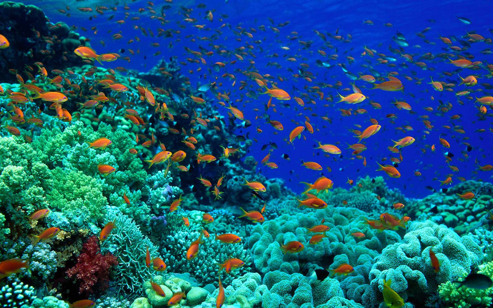 All fish wallpapers hd wallpapers for All the fish