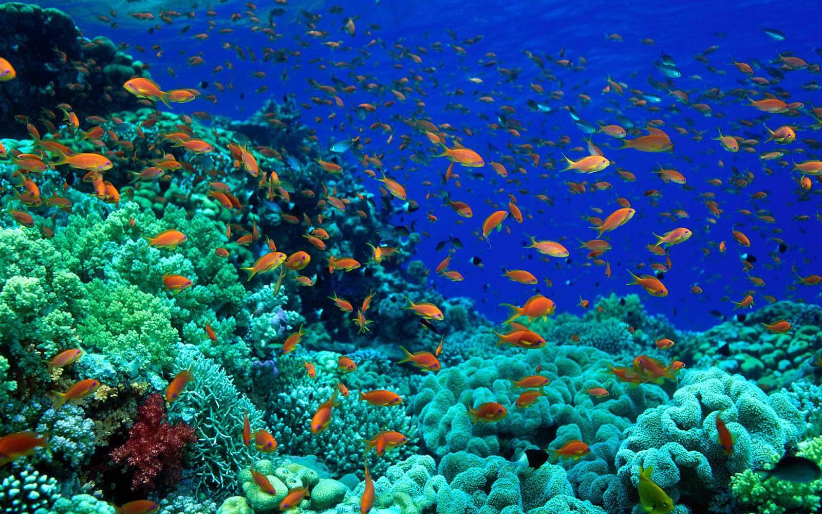 Ikan Dasar Laut dam Background