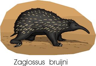 Western Long Beaked Echidna | Zaglossus Bruijni Free Clipart