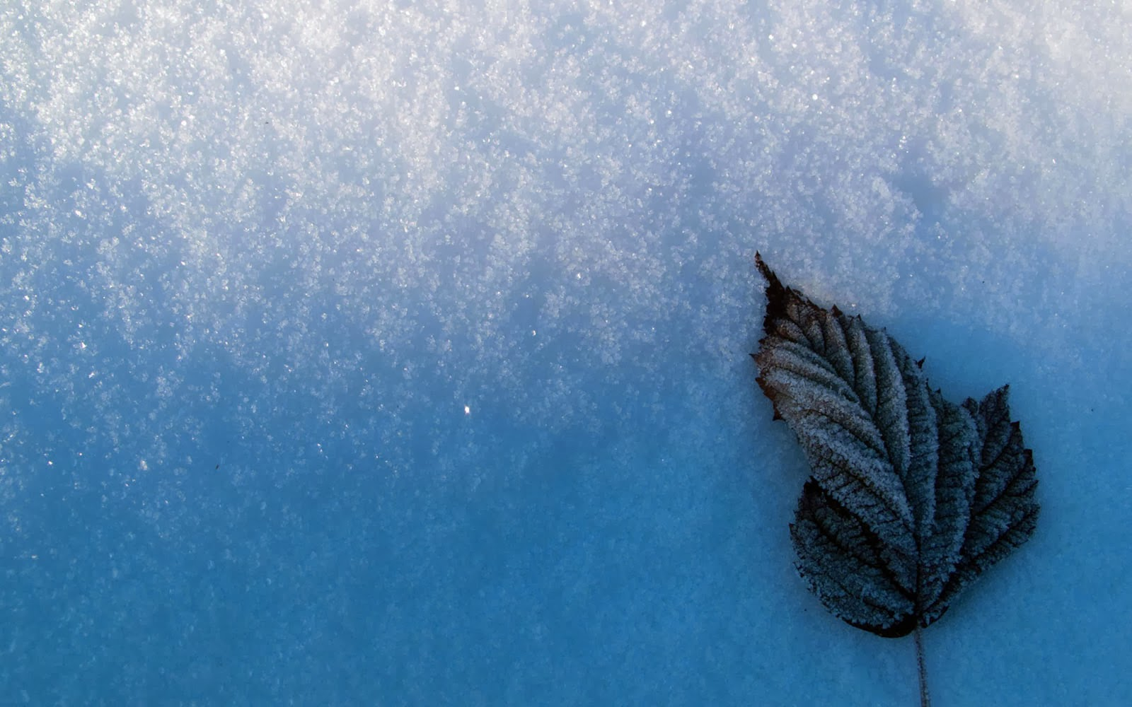 Wallpapers Leaf And Snow Wallpapers