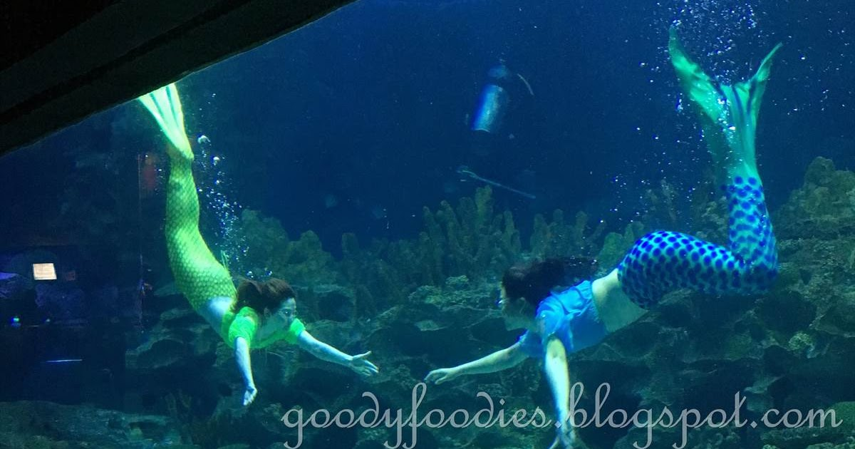 GoodyFoodies: Mermaids @ Aquaria KLCC, Malaysia