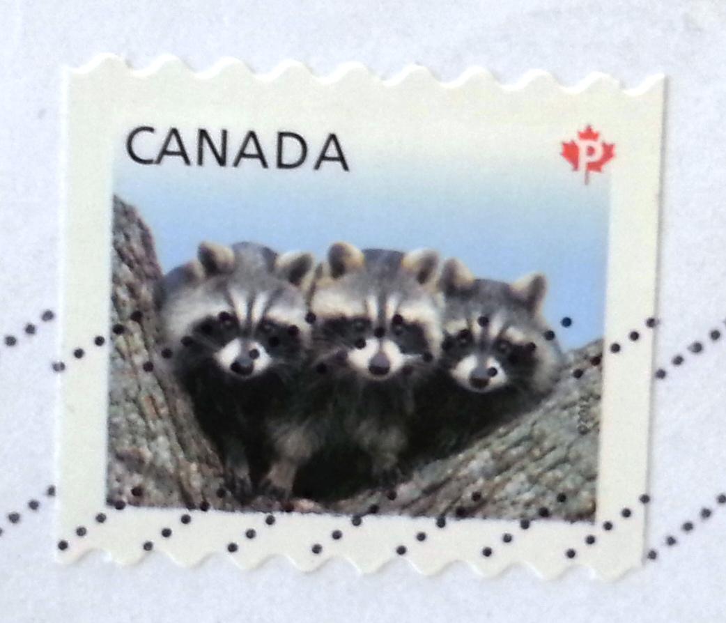 francobollo Raccons serie Baby Wildlife canadese