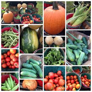 A nice harvest