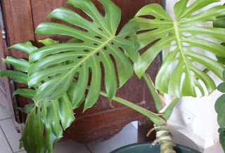 Riego de Plantas, parte 2