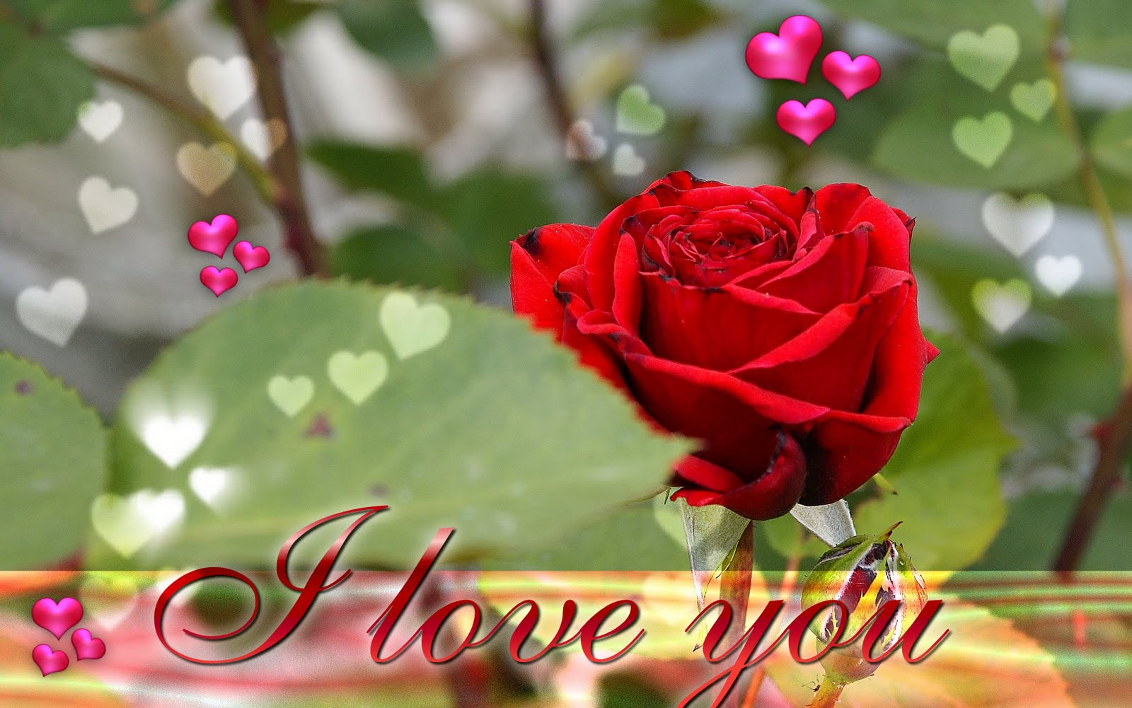 http://4.bp.blogspot.com/-0wQfV1m6r3Q/TawQkk3LBKI/AAAAAAAAAMY/leuRJDRcF_4/s1600/i-love-you-ecard-wallpaper-21.jpg