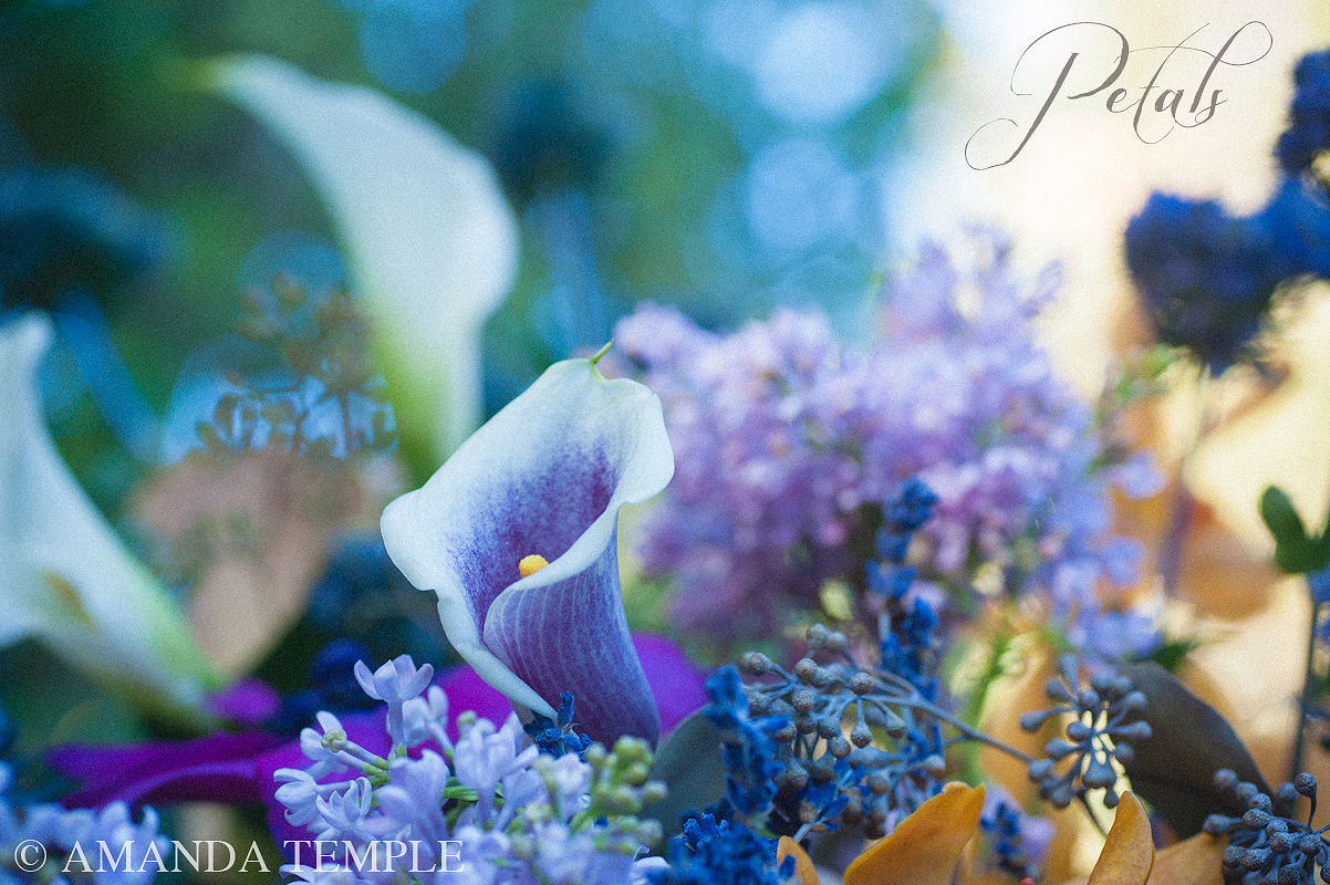 Petals bermuda florist take one what do flowers mean to you izmirmasajfo Choice Image