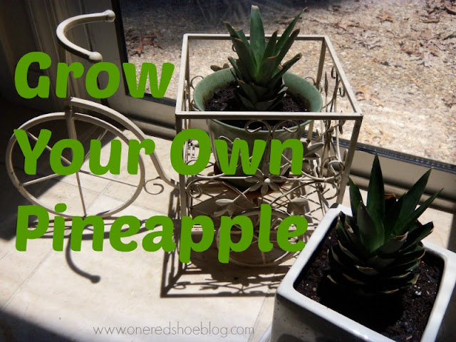 using the crown of a pineapple to grow your own fruit