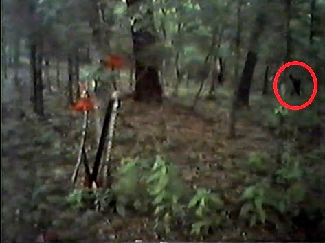 Bigfoot On Video