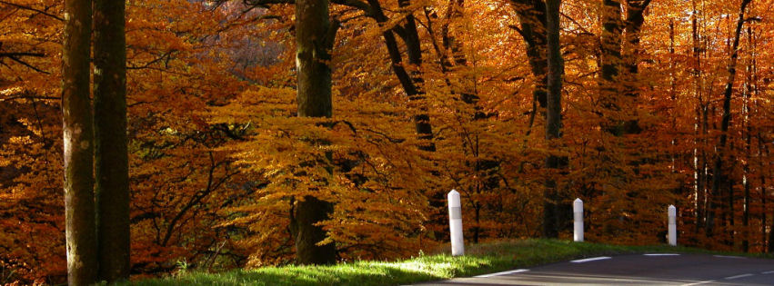 A golden forest facebook cover