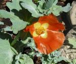 Vackraste blomman idag!  Klicka på fotot för fler exempel!