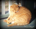 Gingie 2001-2012