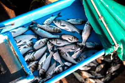 Фото Укринформ: рыба