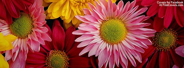 """<img src=""""http://4.bp.blogspot.com/-0xXrU0yIiLo/UfW7LuwpgqI/AAAAAAAAC_k/zjw1bSWMiFs/s1600/colorful_flowers-3447.jpg"""" alt=""""Flower Facebook Covers"""" />"""