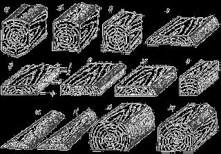 Заболонная древесина