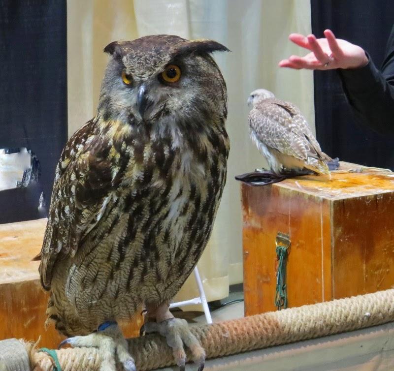 Birds of prey owl