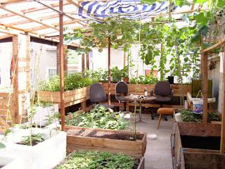 Cách làm vườn rau tại nhà Cách làm vườn rau tại nhà