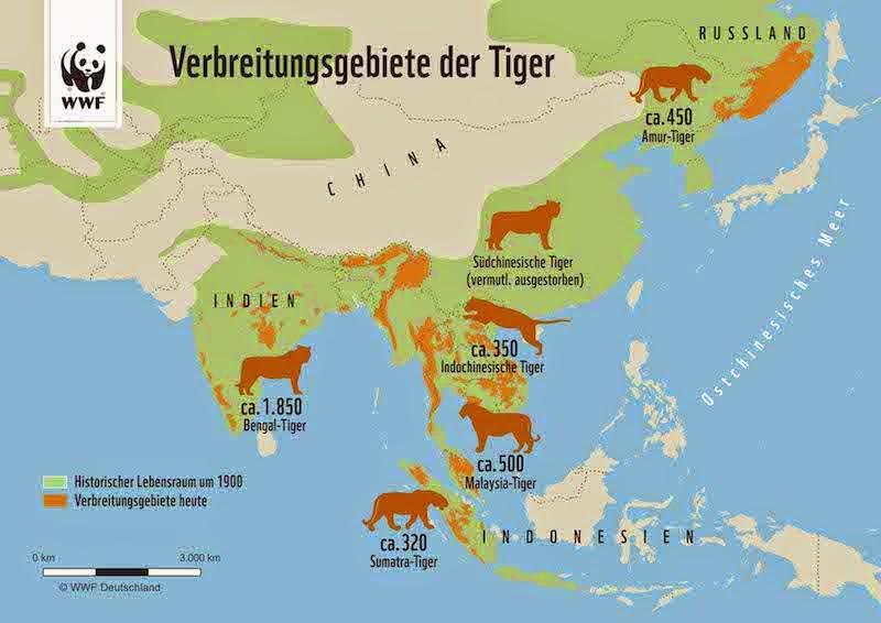 Tiger in Asien