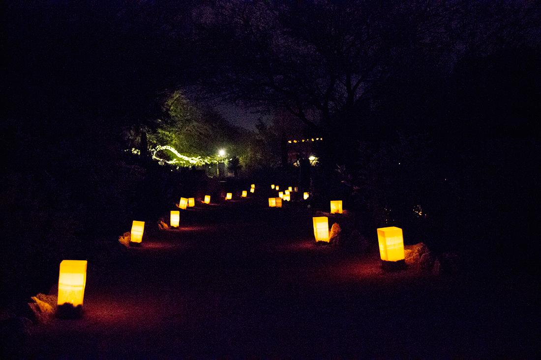 Desert Botanical Garden Phoenix- Luminarias Christmas Festival