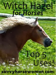Witch Hazel for Horses – Top 5 Uses