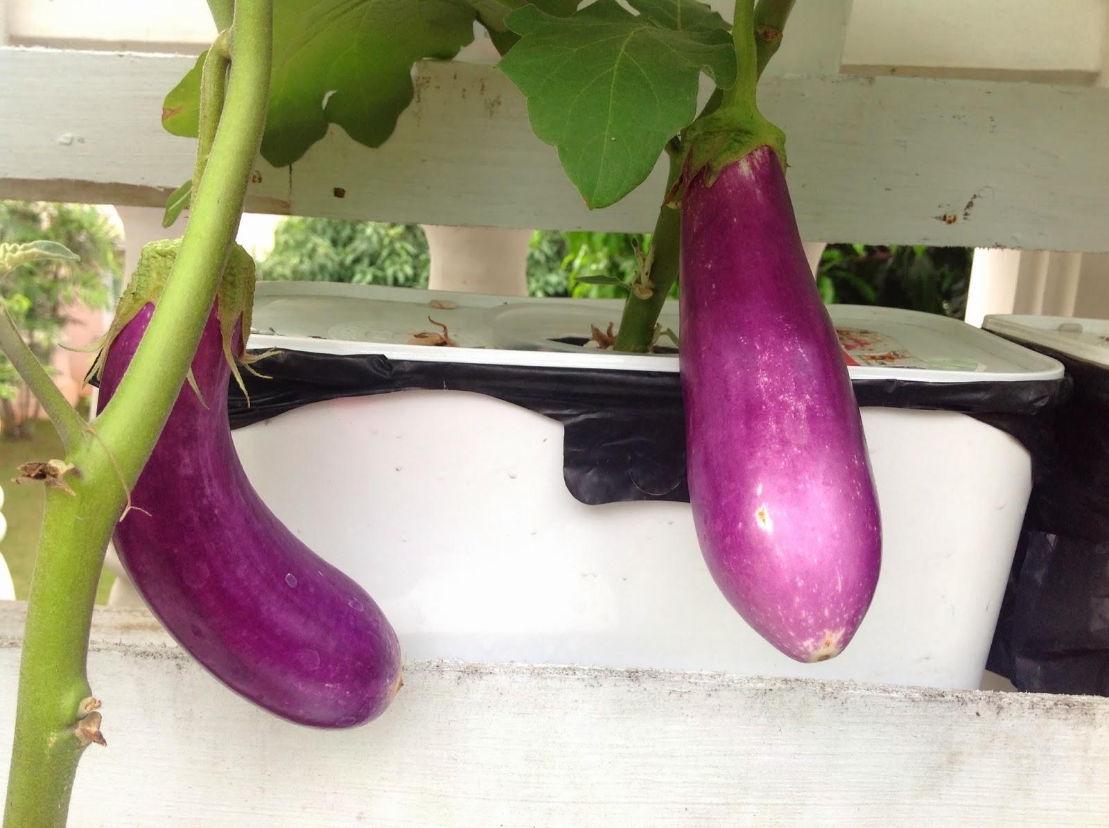 rumah hydroponic yang dibutuhkan tanaman untuk bisa tumbuh
