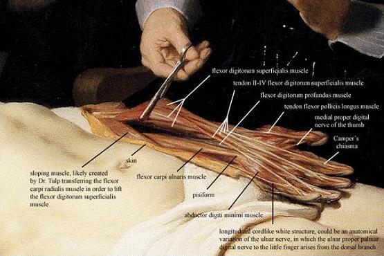 Regimen Sanitatis 2.0: Lecciones anatómicas (y otras)…