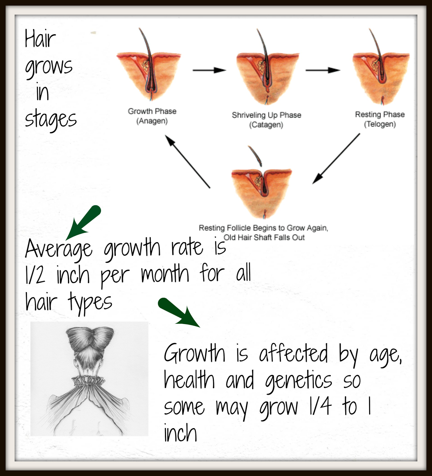 How Fast Does Hair Grow When Pregnant 118