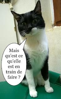 Chat noir et blanc dubitatif.