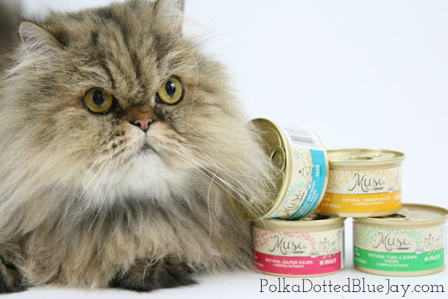 My Cat is my Muse // Pet Photo // Cat Photoshoot // Natural Nutrition Cat Food // #MyCatMyMuse #ad