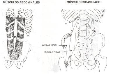 Los abdominales - Culturismo total