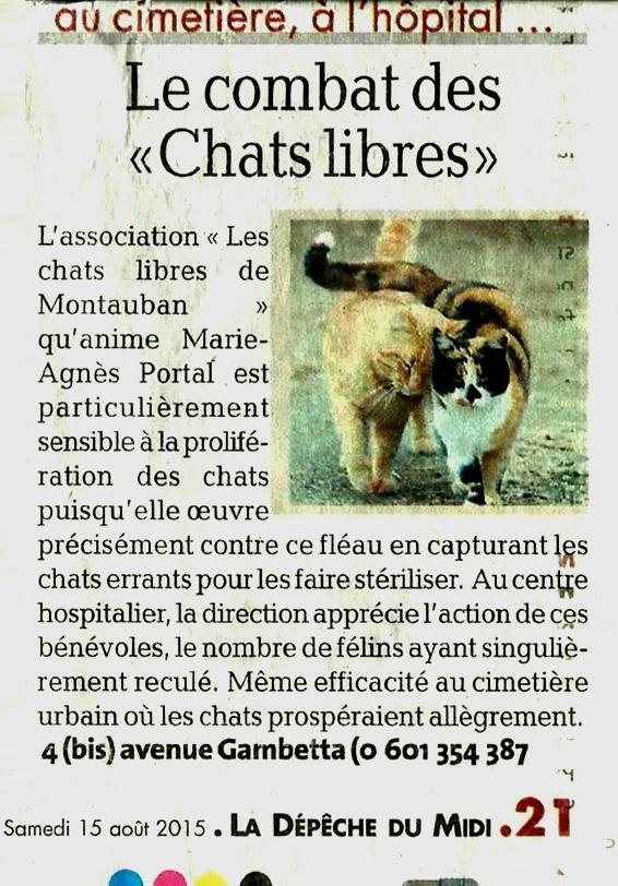 chat montauban