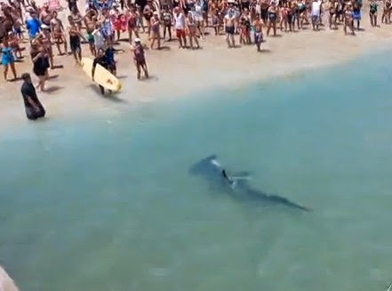 World sharks news fort lauderdale caught from a pier a for Fishing in fort lauderdale