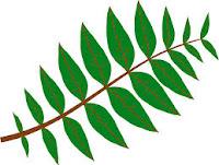 obat herbal batu ginjal obat asam urat herbal obat herbal keputihan