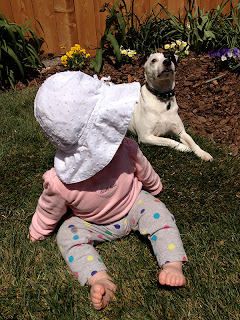 Baby and Dog enjoying new sod