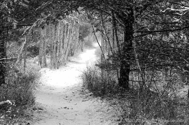 winter woodland