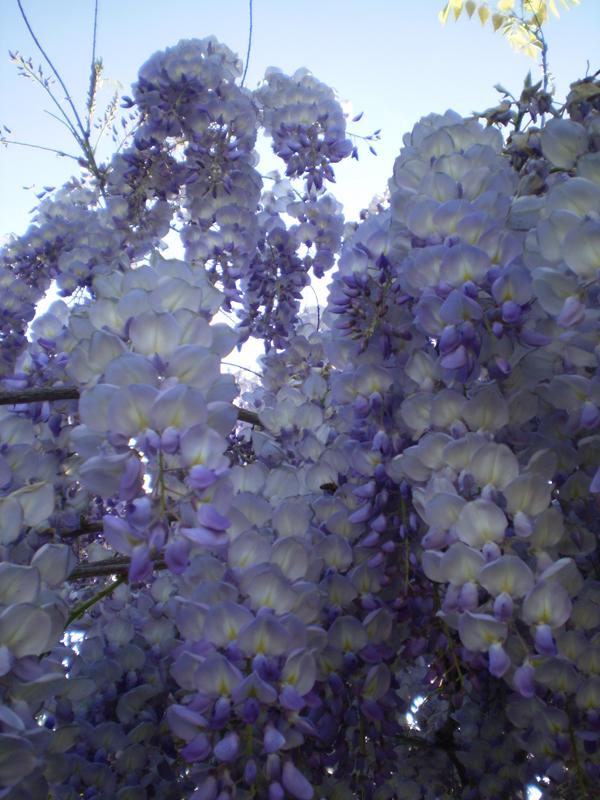 Romantiche emozioni angoli del mio giardino for Foto angoli giardino