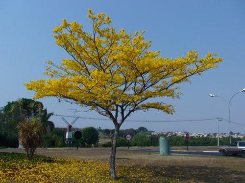 jardim ipe jaguariuna:Dessalina: Jaguariúna, Holambra, Campinas