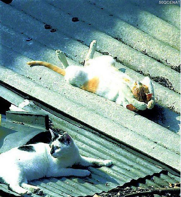 Gülməli, Gülməli şəkillər, kedi, kedi resimleri, komik fotolar, maraqli, maraqli şəkillər, mirt sekiller, pisik sekilleri, pişik şəkilləri, Pişiklər, və, şəkillər, mirt wekiller,