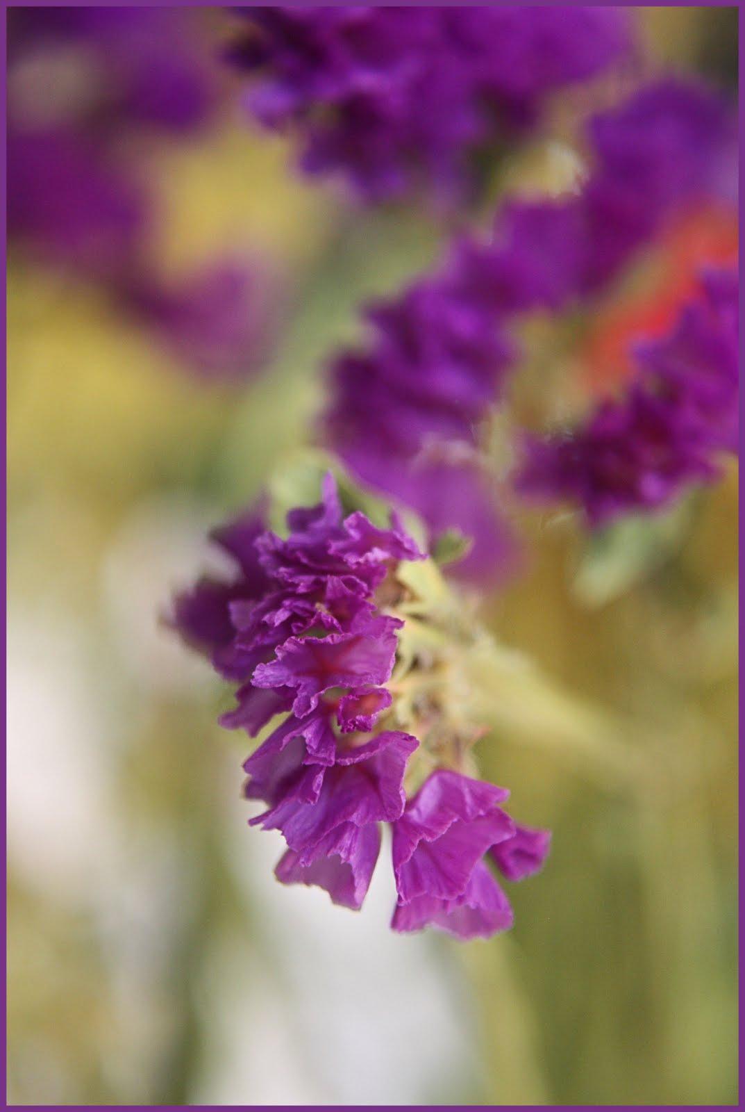 CARLETTA S CAPTURES Purple Statice A Filler Flower