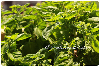 basilico# pesto# foglie