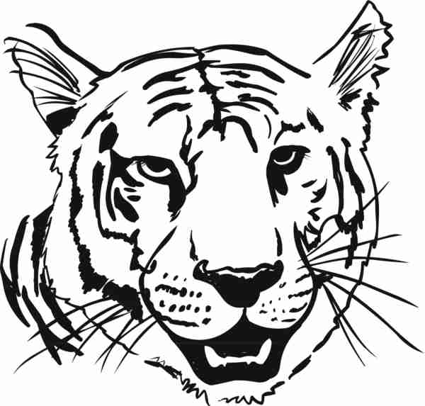 Black And White Tiger Coloring Page